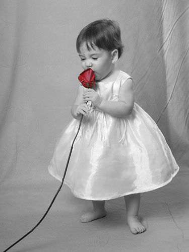 black and white photos with red roses, Natural flower
