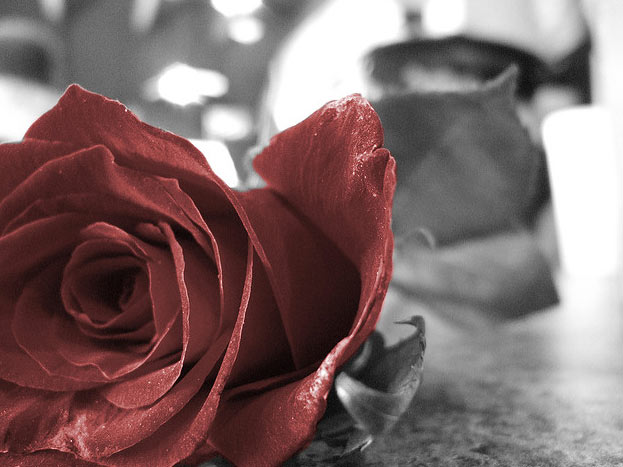 black and white photos with red roses