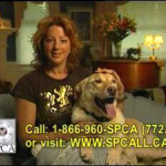 That ASPCA commercial with Sarah McLachlan!