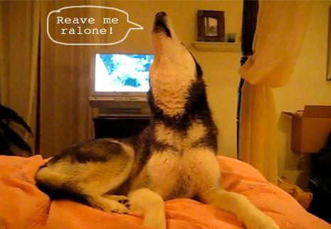 talking dog says I love you